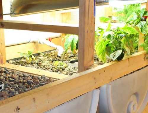 So You Are Going to Start Your Aquaponics Farm?
