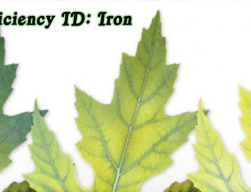 Aquaponics Nutrients: Iron Deficiency