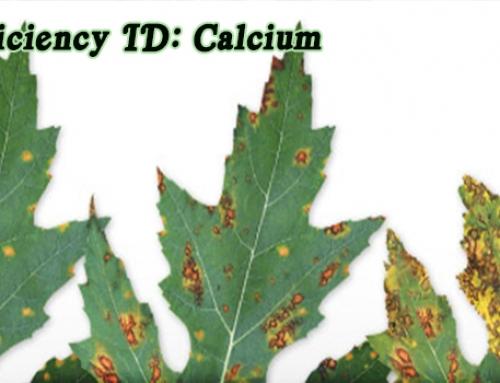 Aquaponics Nutrients: Calcium Deficiency
