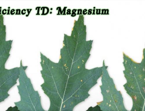 Aquaponics Nutrients: Magnesium Deficiency