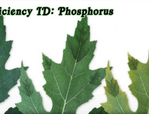 Aquaponics Nutrients: Phosphorus Deficiency