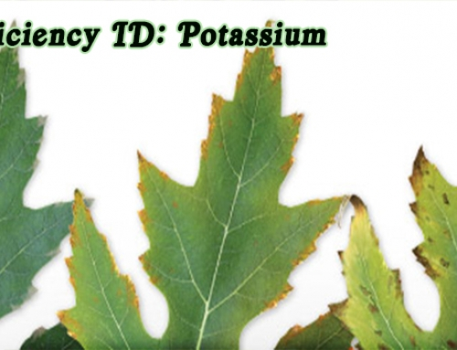 Aquaponics Nutrients: Potassium Deficiency