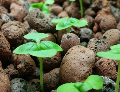 Aquaponics System Nutrients: An Overview and Rundown